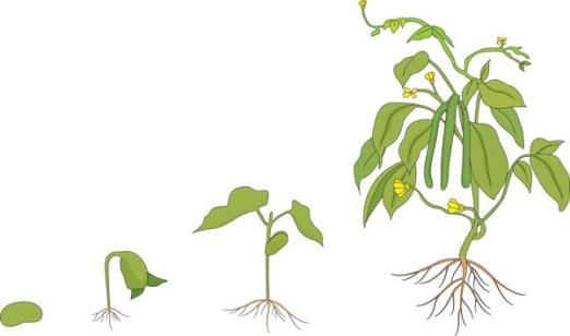 600-94525318-growing-plant
